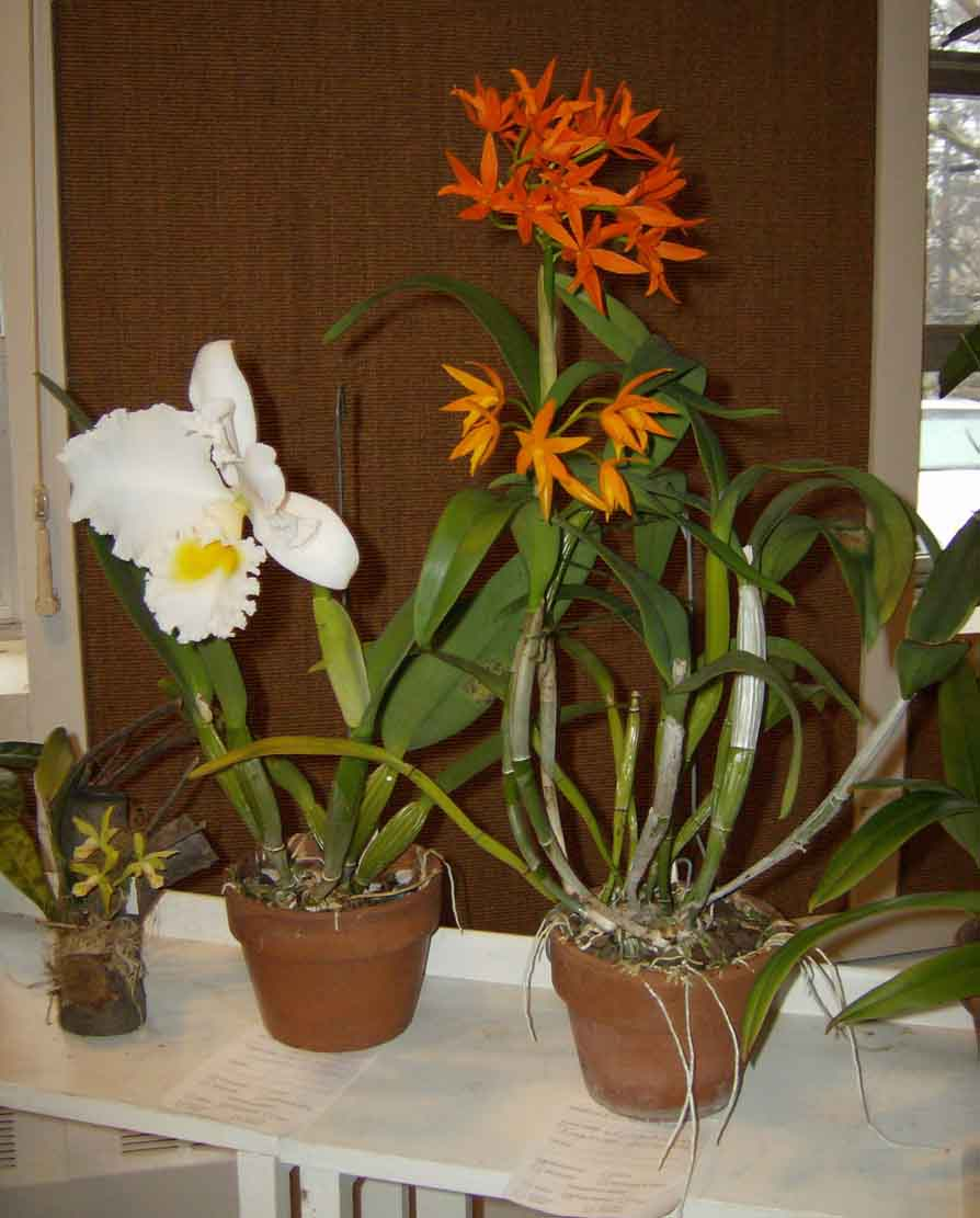 Rob Greene's plants on the show table